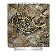 Young Eastern Garter Snake - Thamnophis Sirtalis Shower Curtain