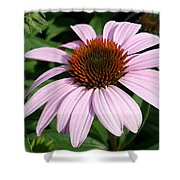 Young Echinacea Bloom Shower Curtain