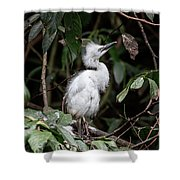 Young Egret Costa Rica Shower Curtain