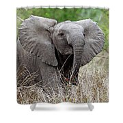 Young Elephant In The Light, Africa Wildlife Shower Curtain