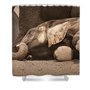 Young Elephant Lying Down Shower Curtain