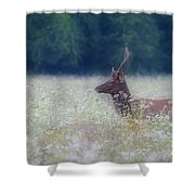 Young Elk In The Smokies. Shower Curtain