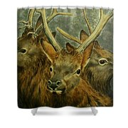 Young Elk Trio- Wapiti Shower Curtain