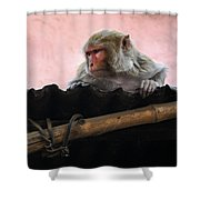 Young Female Asian Monkey Sitting On The Roof Shower Curtain
