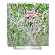 Young Fox Kit Hiding In Tall Grass Shower Curtain