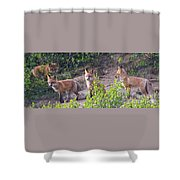 Young Foxes At The Den Shower Curtain