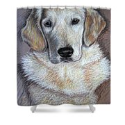 Young Golden Retriever Shower Curtain