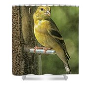 Young Goldfinch Shower Curtain