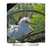 Young Great Egret Shower Curtain