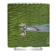 Young Grebe Shower Curtain