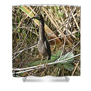 Young Green Heron  Shower Curtain