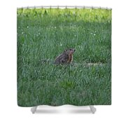 Young Groundhog Shower Curtain