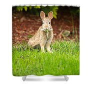 Young Healthy Wild Rabbit Eating Fresh Grass From Yard  Shower Curtain