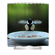 Young Hungry Tit Shower Curtain