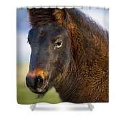 Young Icelandic Horse Shower Curtain