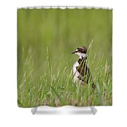 Young Killdeer In Grass Shower Curtain