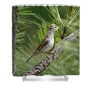 Young Lark Sparrow 1 Shower Curtain
