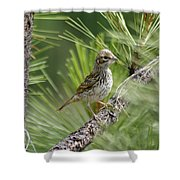 Young Lark Sparrow 2 Shower Curtain