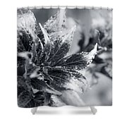 Young Leaves In Black And White Shower Curtain