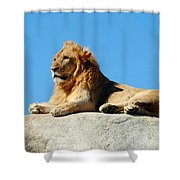 Young Male Lion Reclining On A Rock Shower Curtain