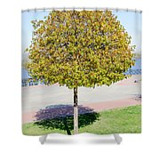 Young Maple Tree Shower Curtain