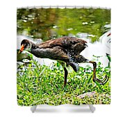 Young Moorhen Shower Curtain