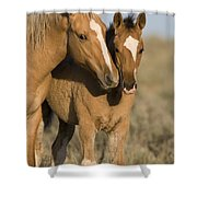Young Mustangs Playing Shower Curtain