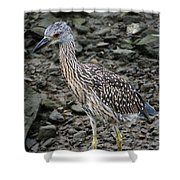 Young Night Heron Shower Curtain