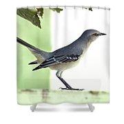 Young Northern Mockingbird Shower Curtain