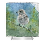 Young Northern Shrike Shower Curtain