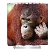 Young Orang Utan Looking Thoughtful Shower Curtain