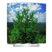 Young Pine Shower Curtain
