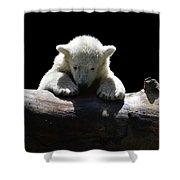 Young Polar Bear On A Log Shower Curtain