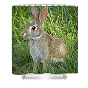 Young Rabbit Shower Curtain
