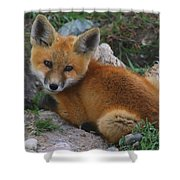 Young Red Fox Shower Curtain