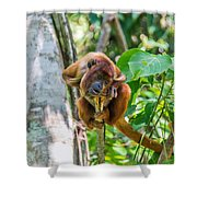 Young Red Howler Monkey Shower Curtain