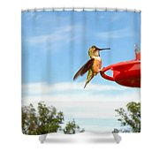 Young Rufous Shower Curtain