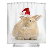 Young Sandy Rabbit Wearing A Christmas Shower Curtain