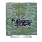 Young Sea Turtle Shower Curtain