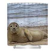 Young Seal Pup On Beach - Horsey, Norfolk, Uk Shower Curtain