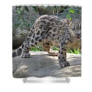 Young Snow Leopard Shower Curtain