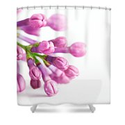 Young Spring Lilac Flowers Blooming Shower Curtain