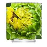 Young Sunflower Shower Curtain
