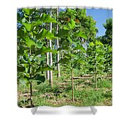Young Teak Plantation Shower Curtain