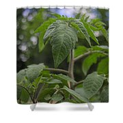 Young Tomato Shower Curtain
