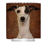 Young Whippet Shower Curtain