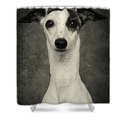 Young Whippet In Black And White Shower Curtain