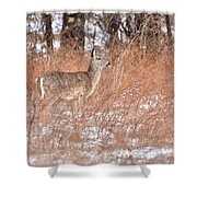 Young White-tailed Deer In The Snow Shower Curtain