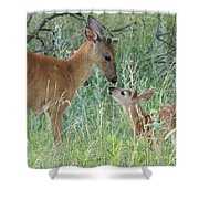 Young White-tailed Deer Say Hello Shower Curtain