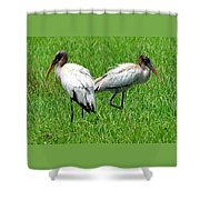 Young Wood Storks 2 Shower Curtain